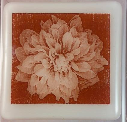 Plate Dahlia